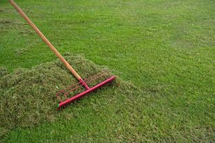 Raking freshly cut grass off a lawn